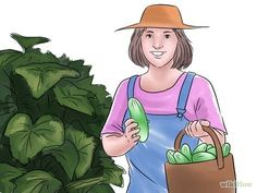 How to Grow Cucumbers Indoors. Cucumbers are nutritious and can be prepared and eaten in a variety of ways. Growing cucumbers indoors means you can have this crunchy treat available year-round. The vines of cucumber plants spread out over. Cucumber Flower, Cucumber Plant, Cucumber Seeds, Raised Bed Garden Design, Sandy Soil, Raised Beds, Gardening Tips, Plants, Continue