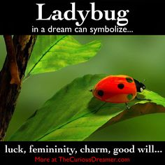 In a dream, a ladybug can symbolize...  More at TheCuriousDreamer.   #DreamMeaning #DreamSymbol