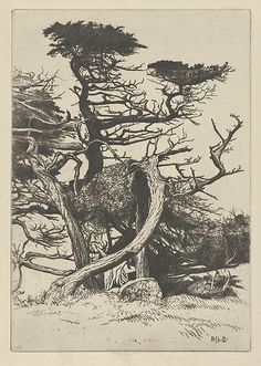 Line of Beauty- Ernest Haskell etching and engraving