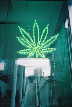 california dispensary