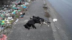 animale omorate cu salbaticie si aruncate la marginea drumului pe trotuar in vazul tuturor ingrozind trecatorii!