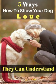 I have listed out five amazing ways that will give you better ideas how to show your dog love. Dogs that are treated properly have the best temperaments and they hold no reservations in reciprocating the love they have received.