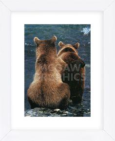 Two Bear Cubs (Framed)