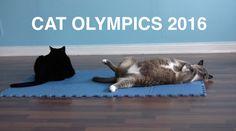 Cat Olympics 2016
