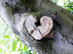 Of course trees have hearts...