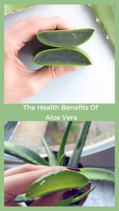 Aloe Vera Plant Luxury Beauty Retreatment Benefits are so useful and beneficial you can find it world over, packed and sealed. There are 300 varieties of Aloe Vera plant with many different medicinal benefits Nutrition Holistique, Arbonne Nutrition, Holistic Nutrition, Nutrition Education, Health And Wellness, Health Tips, Nutrition Websites, Nutrition Products, Nutrition Articles