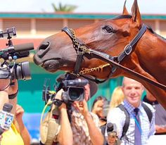 American Pharoah playing with the cameras at @delmarracing!