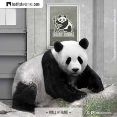 Wild Life, Fisher, Earth Poster, Wildlife Day, Poster S, Animal Posters, Panda Bear, Vector Art, Contemporary Art