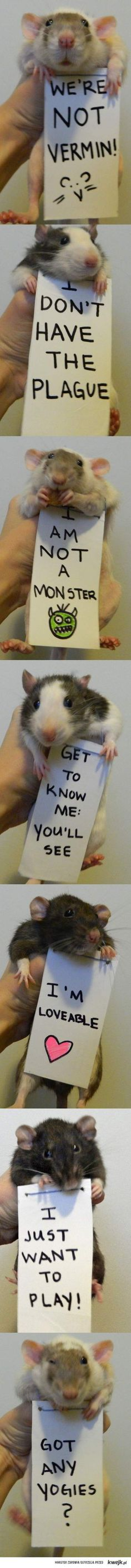 I had pet rats as a child.  They are smart, clean, trainable, and sweet as can be.  <3