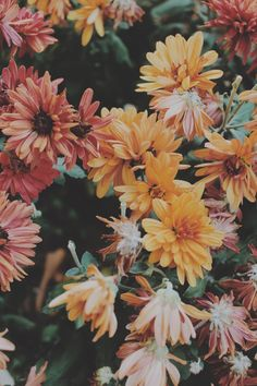 Imagem de flowers, nature, and vintage