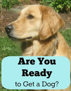 Are You Ready to Get a Dog? Click the pic for a pawsome fun quiz form my friends over at 'Something Wagging'