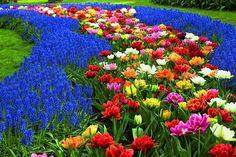 ZielonyKLIK: Wiosna w ogrodzie - Kwiaty wiosenne cz. 1