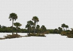 view from The United States by Gobotree, including Florida, cutout plants, palm