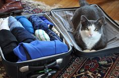 How to Pack for a Week in a Carry-on Bag by smartertravel. Photo credit: Carline Costello #Travel #Packing_Tips