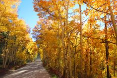 The Perfect Fall Itinerary | Breck Connection