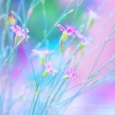 Spring Flowers, Wild Flowers, Flowers Nature, Belleza Natural, Flower Wallpaper, Vintage Flowers, Flower Art, Paper Flowers, Flower Arrangements