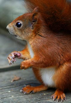 Little Squirrel Er kwam er mij eentje groeten in de tuin!! Ik was de koning te rijk!!! Ph