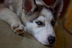 deep blue eyes by Gabriel Harnois on