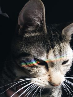 cats, cute, tumblr, aesthetic