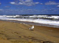 Virginia Beach,VA
