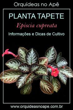Best Potted Plants, Garden Plants, Indoor Plants, Cactus Y Suculentas, What Inspires You, All Flowers, Plant Design, Begonia, Hanging Plants