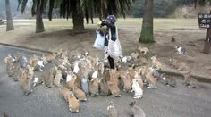 Ōkunoshima Island. Everyone loves rabbits! With their long ears, adorable noses, cute plump bodies, and prophetic abilities, they're almost as loveable as penguins or kittens!  And fortunately for all you rabbit lovers out there, a veritable rabbit paradise exists in the form ofŌkunoshima, an island just 3.4 kilometers (about 2.1 mi ...