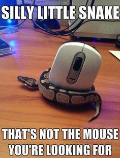 Silly little snake