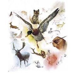 Animal sketches by Rien Poortvliet (Dutch, 1932-1995
