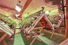 разведение клубники по голландской технологии: 6 тыс изображений найдено в Яндекс.Картинках