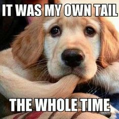 IT WAS MY OWN TAIL THE WHOLE TIME