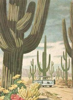 Reader's Digest, April 1956 #cactusdesert