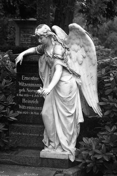 """Pierre the III ~ """"Angel PF"""""""