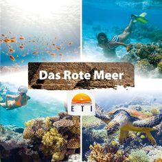 Tauchen, Schnorcheln. Unterwasserwelt Rotes Meer Tauchurlaub Ägypten - Faszination Tauchen im Roten Meer. Das Rote Meer ist eines der schönsten Tauchgebiete der Welt. Artenvielfalt an Korallen, tropischen Fischen, bunte Fische entdecken, schwerelos am Korallenriff verweilen oder ein Wrack besichtigen. Tauchen in Ägypten ist ein Erlebnis.  #diving #snorkling #fische #tauchen #redsea #erlebnis #urlaub #egypt Red Sea, Egypt, Movie Posters, Movies, Snorkeling, Films, Film Poster, Cinema, Movie
