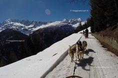 La corsa sulle slitte trainate dai cani, Arnoga #inLombardia365 http://www.viaggiaescopri.it/arnoga-e-bormio-ciaspole-sleddog/