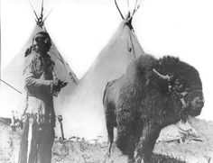 Iron Tail (Oglala) with a Buffalo named Black Diamond - no date