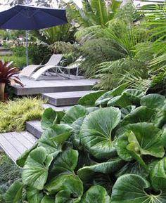 1000 images about seed landscapes on pinterest auckland for Native garden designs nz