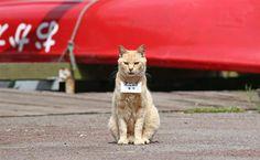 """芦ノ湖の湖尻地区で観光客に人気の看板猫。首から下げられた""""名刺""""には「営業課長」の肩書き。ボート乗り場の集客に一役買っている=20日、神奈川県箱根町(尾崎修二撮影)"""