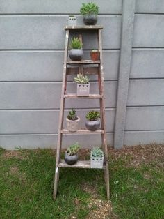 Rustic ladder with succulents!