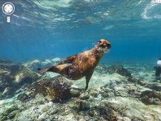 Famosas por terem sido visitadas por Charles Darwin quando o cientista elaborou a Teoria da Evolução, as Ilhas Galápagos, na região do Equador, podem ser visitadas pelo Street View. As imagens foram feitas com a mochila Trekker, sistema portátil de câmeras. No G1 Tecnologia.