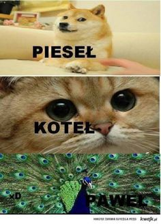 Stupid Funny Memes, Wtf Funny, Funny Images, Funny Pictures, Polish Memes, Weekend Humor, Aesthetic Memes, Funny Mems, Kitty Games
