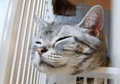 cat #426