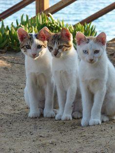 Cyprus Cats by Honeytoo1978, via Flickr