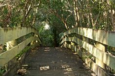 http://www.thrucharlieseyes.com/blog/2015/2/bridge-to