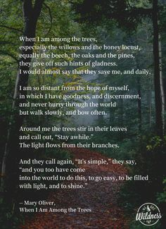 Mary Oliver has changed our lives for the better and it is with a sad heart that. Mary Oliver has Nature Poem, Nature Quotes, Forest Quotes, Cool Words, Wise Words, Mary Oliver Poems, Tree Quotes, Sad Heart, Forest Bathing