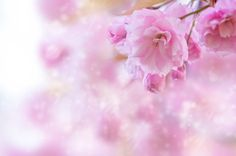 One Sweet Day by kitty bern on 500px