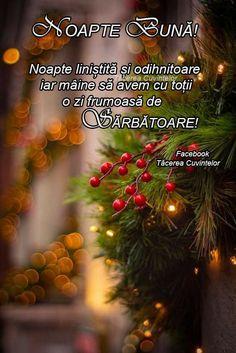 Christmas Tree, Holiday Decor, Good Night, Teal Christmas Tree, Xmas Trees, Christmas Trees, Xmas Tree