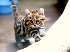 Animals of the Week: The Philadelphia Zoo's African Black-Footed Cat Kittens
