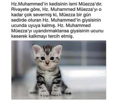 Allah Islam, Islam Quran, Muhammed Sav, Fun Comics, Galaxy Wallpaper, Sufi, Quotes About God, Animal Kingdom, Animals And Pets