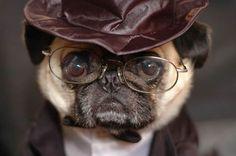 It's #HarryPugger! www.jointhepugs.com