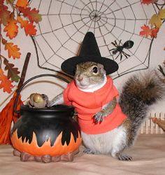 Sugar Bush is stirrin' up trouble on Halloween!